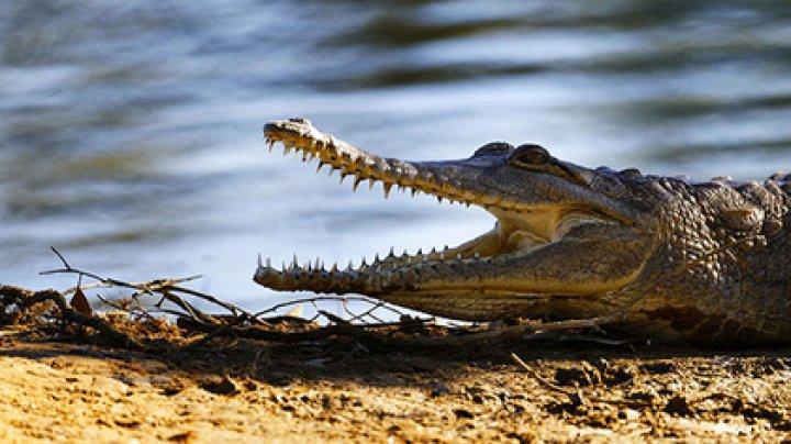 Сообразительный подросток отбил друга у крокодила