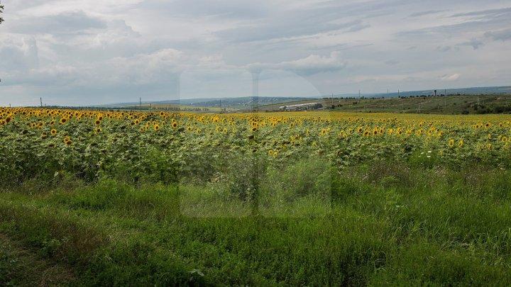 Николай Чубук: У Молдовы достаточно механизмов для зарубежных инвесторов в сельское хозяйство и без продажи им земли