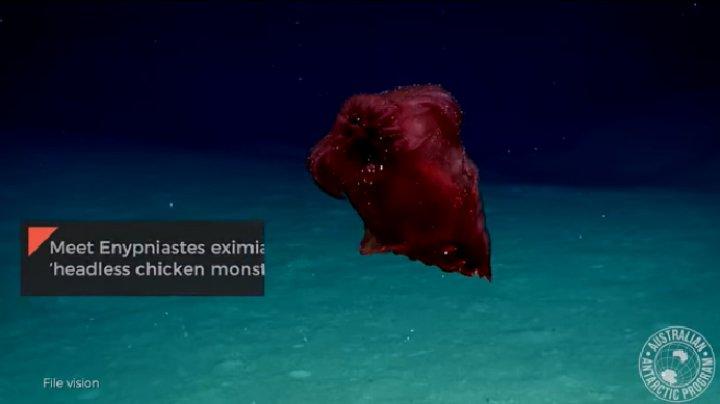 """""""Неизвестное"""" морское существо озадачило австралийских ученых"""