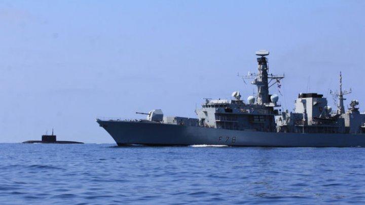 Военные учения в Британии связали с гибелью более 80 китов