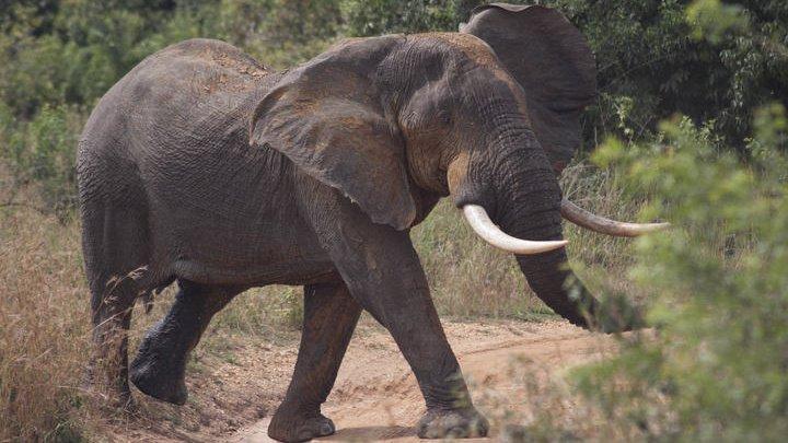 Слон разбил машину с туристами во время сафари в ЮАР