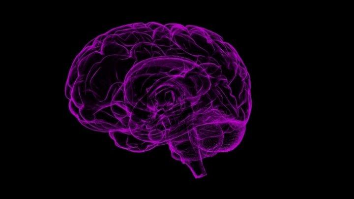 Ученые выяснили, как мозг человека запоминает и стирает информацию