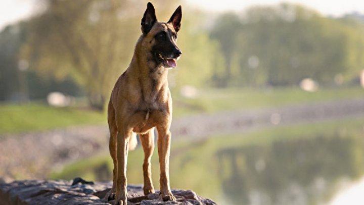 Во Франции создали очки-видеокамеру для служебных псов