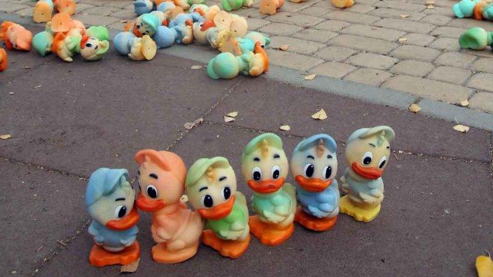 В Виннице ночью посреди улицы разбросали тысячу резиновых утят: фото