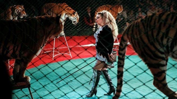 В Португалии запретили выступления диких животных в цирках