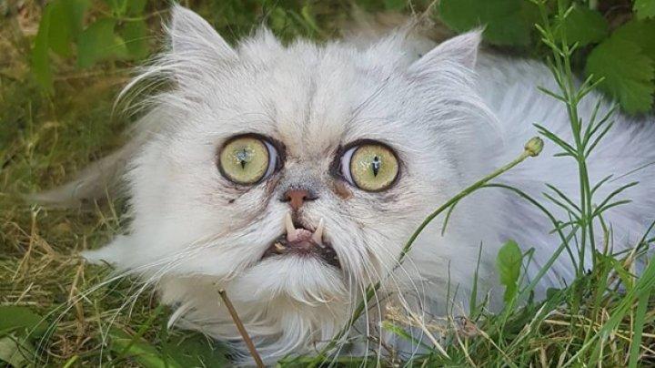 """Фото """"самого страшного"""" кота стали вирусными"""