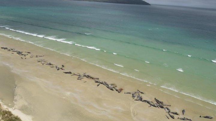 В Новой Зеландии на берег выбросились около 150 дельфинов