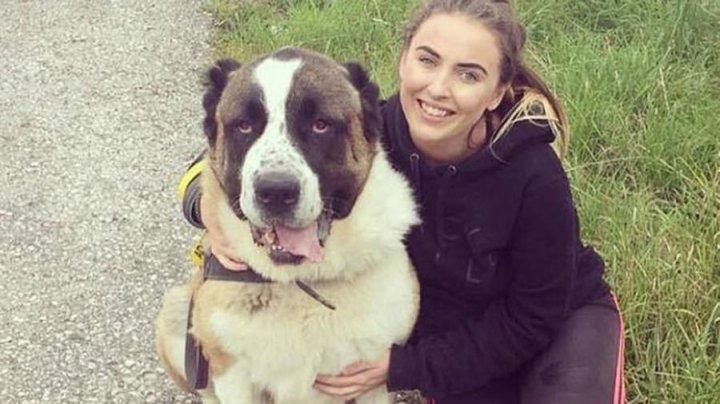 В Великобритании 80-килограммовый пес испугался фейерверков и умер