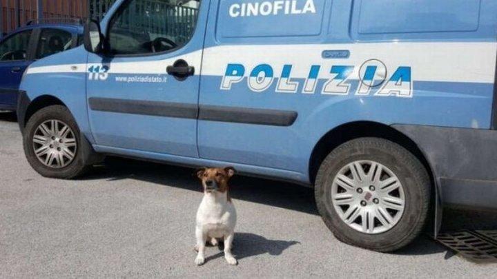 Мафия назначила награду в 5000 евро за голову служебного пса с супернюхом