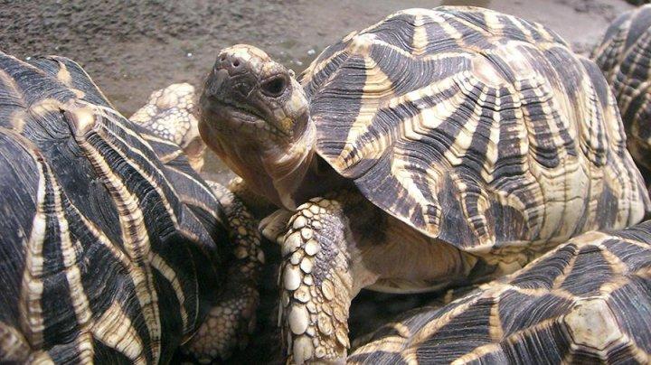 Три редкие черепахи похищены из датского зоопарка