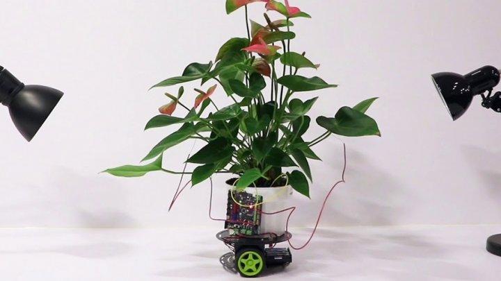 Учёные создали самостоятельно передвигающееся растение-киборга