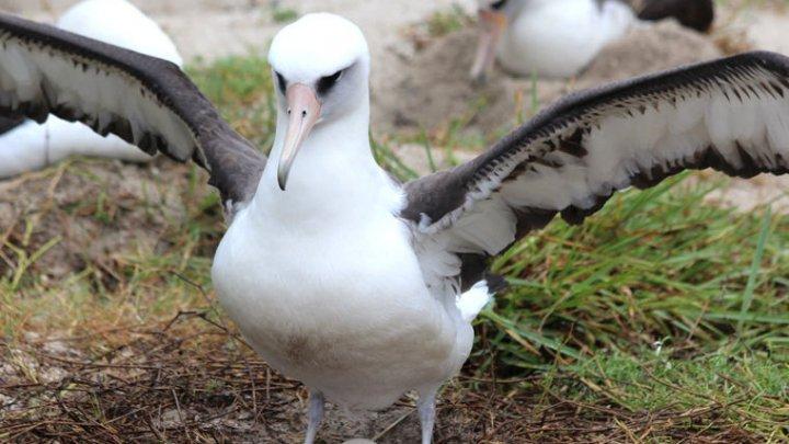 Старейшая в мире птица вновь стала мамой в 68 лет