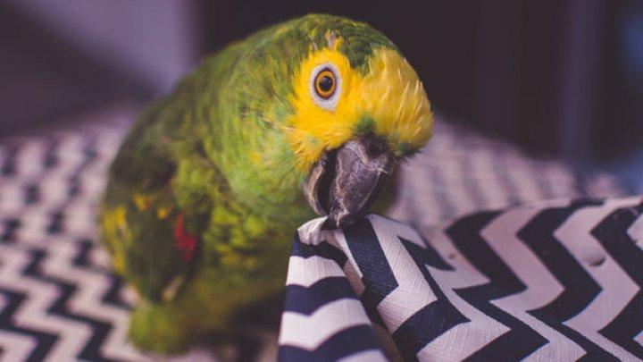 Попугай заказал на Amazon любимую закуску