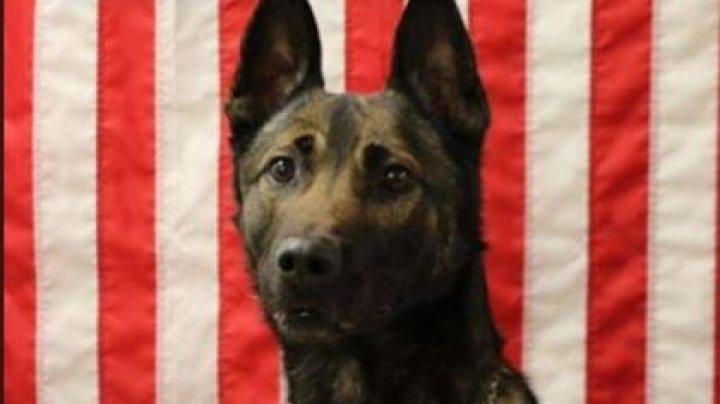 Пес спас солдат и погиб в Афганистане