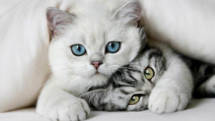 Ученые рассказали о неожиданной опасности кошек для человека