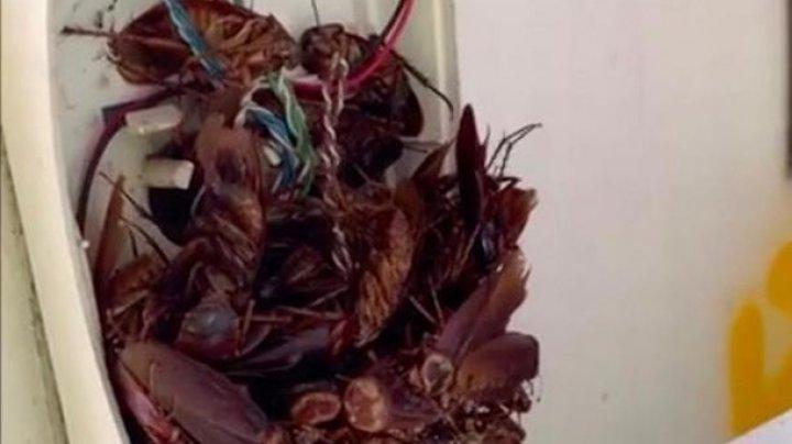 Австралиец нашел телефон с десятками тараканов (видео)