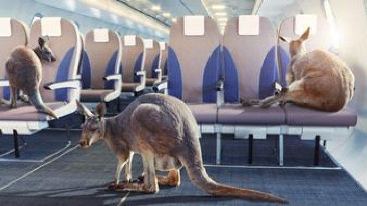 В Ростовском аэропорту побывал кенгуру