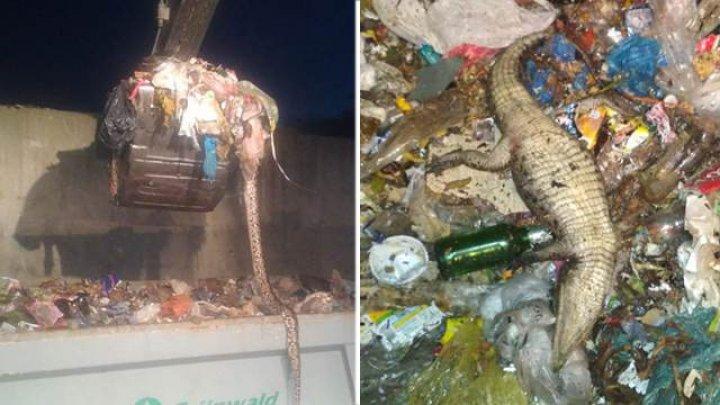 На свалке в Сочи нашли мертвого крокодила и питона
