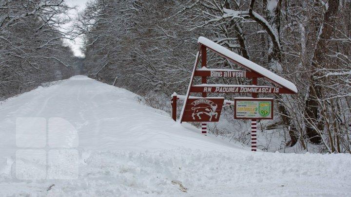 Популяция зубров в Молдове на грани вымирания