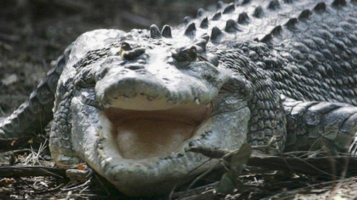 Мужчина покусал крокодила ради спасения сына