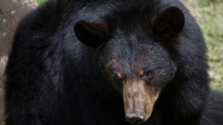 Потерявшийся в лесу трехлетний ребенок рассказал о медведе-спасителе