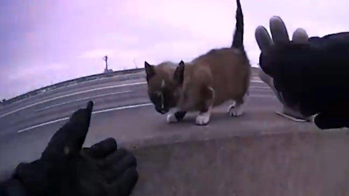 Полицейский спас маленького котенка, оказавшегося на оживленном шоссе (видео)