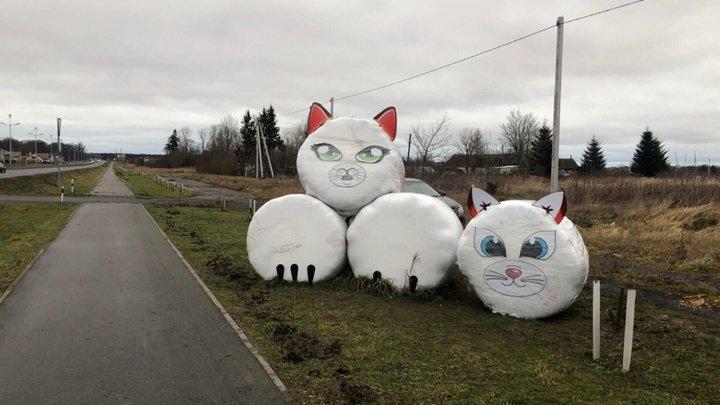 В Зеленоградске украли котенка из сена, весящего более тысячи килограммов