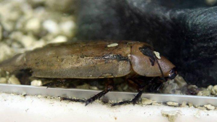 В США зоопарк предложил назвать таракана в честь экс-любимого и накормить им сурикатов