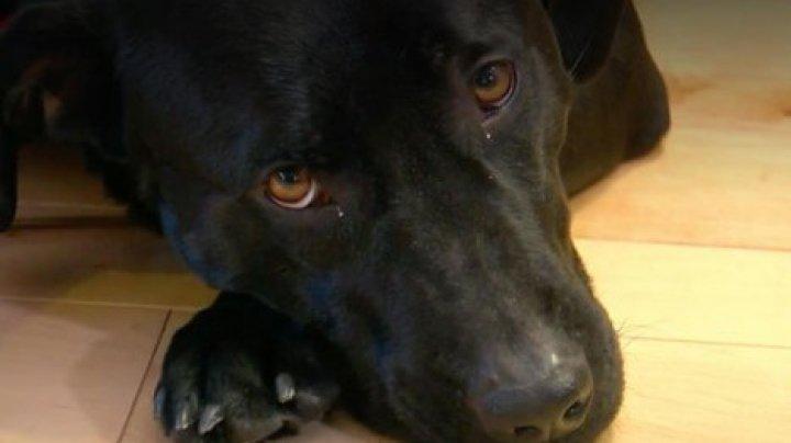 Собака спасла пожилую американку от гибели на морозе