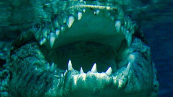 Крокодил заживо съел мужчину на глазах у племянника