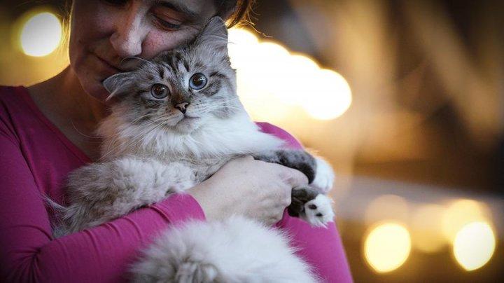Кошки полных людей копируют своих хозяев и страдают от лишнего веса