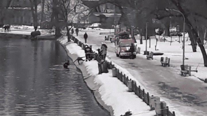В Днепре мужчина спас собаку из ледяной воды (видео)