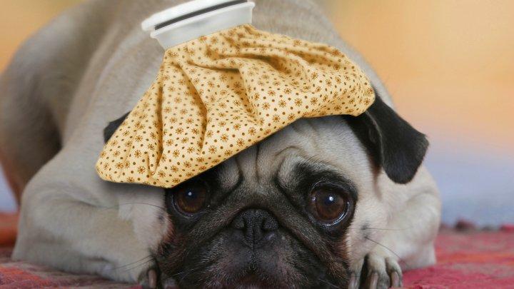 Ученые: Характер собак меняется со временем