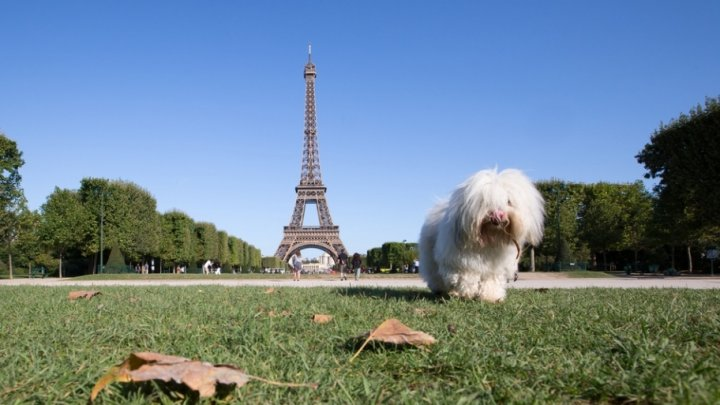 Парижским собакам разрешили гулять в парках