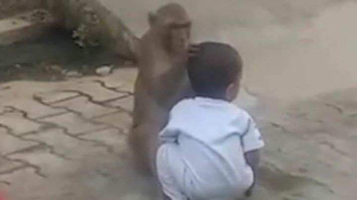 В Индии обезьяна украла двухлетнего мальчика (видео)