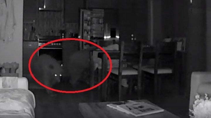 Двое медвежат забрались через открытое окно в один из частных домов в Калифорнии