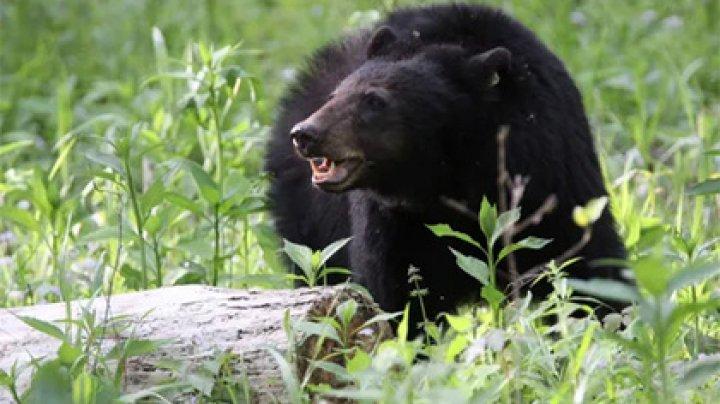 Медведь съел наркомана