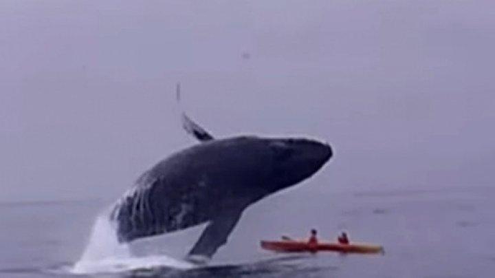 Туристы пережили падение гигантского кита и чудом остались в живых