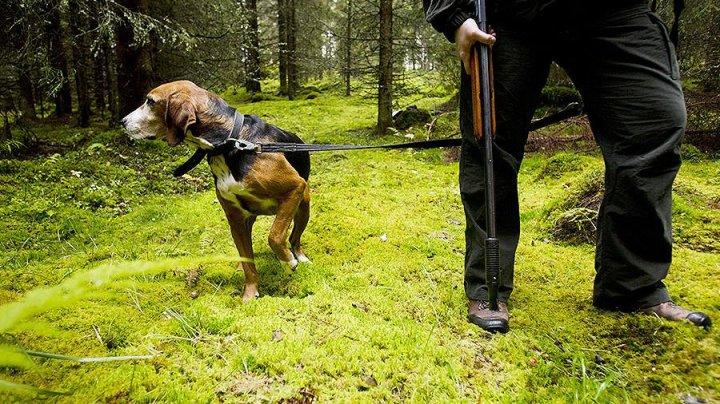 В Германии лишили лицензии подстреленного собственной собакой охотника