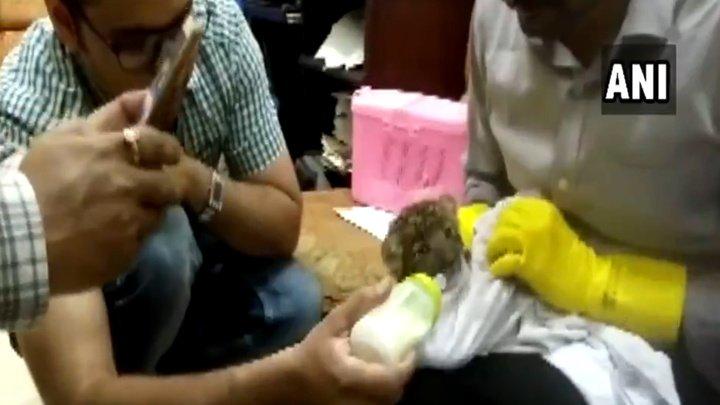 В Индии мужчина попытался провезти в чемодане детеныша леопарда