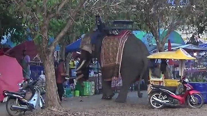 Слон с девушкой на бивне разгромил ярмарку в Таиланде (видео)