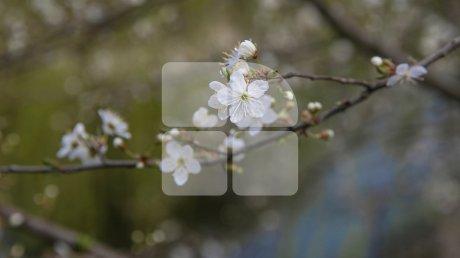 Весна, цветы, аллергия: как пережить сезон пыльцы
