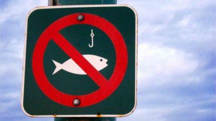 С 15 апреля по 15 июня в Молдове введут запрет на ловлю рыбы