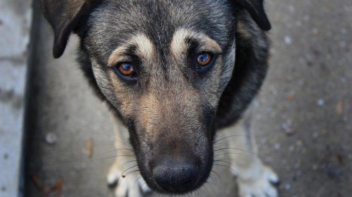 Лечит животных, а не усыпляет: в Челябинске пожаловались на местного ветеринара