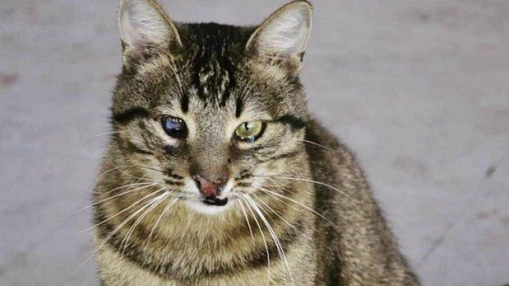 В Чернигове кот Терминатор стал известным блогером