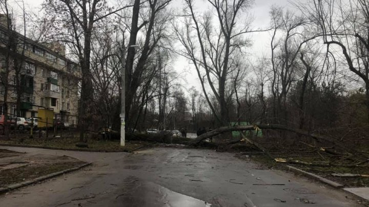 На Рышкановке рухнуло дерево во дворах из-за сильного ветра