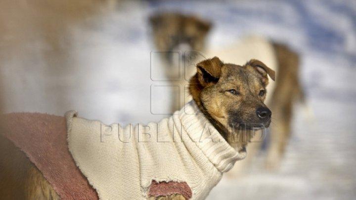 Защитники животных провели протест у мэрии против жестокого обращения с бродячими собаками