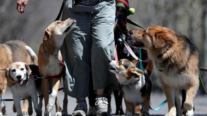 В Нью-Джерси полицейские под прикрытием будут штрафовать хозяев, которые не убирают за собаками