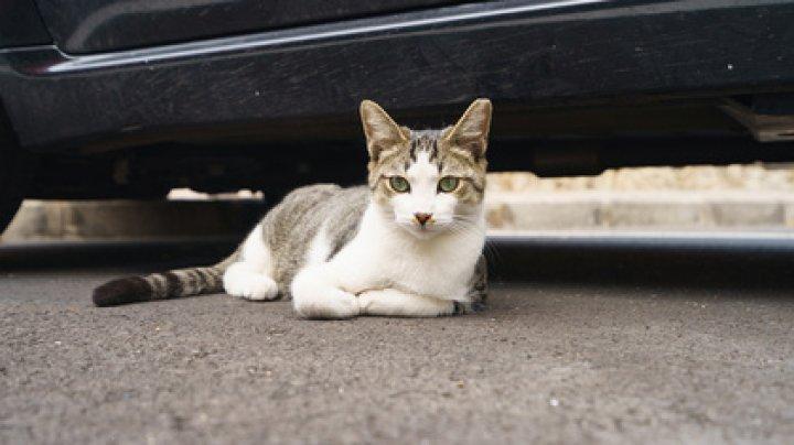 Женщина пережила нападение котенка и потратила на лечение десятки тысяч долларов
