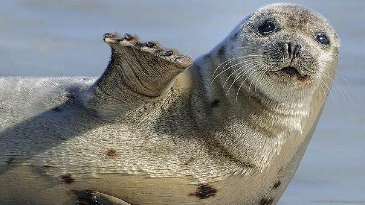 Жителей Латвии попросили не ездить на море из-за стресса у тюленей
